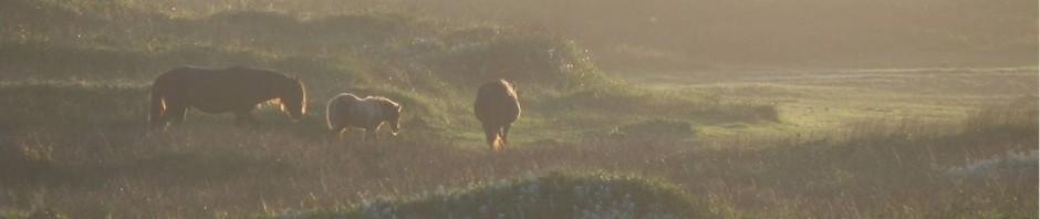 sunsetcrop